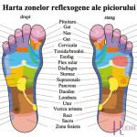 harta-reflexologica-a-talpii-piciorului_jpg-mica
